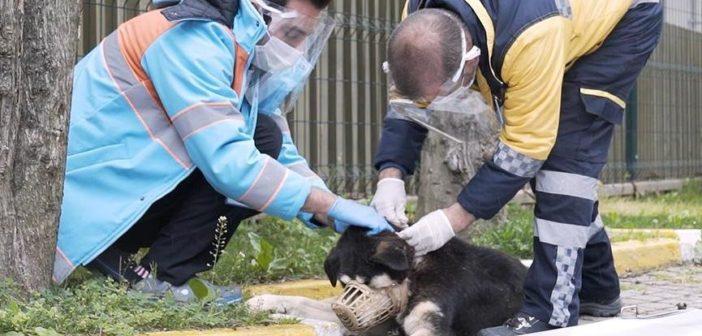 Beşiktaş Belediyesi `Mobivet´ ile sokak hayvanlarını yalnız bırakmadıklarını duyurdu